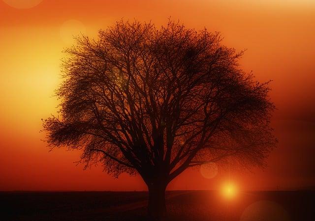 Black Aesthetic Wallpaper Free Illustration Tree Solitary Sunset Free Image On
