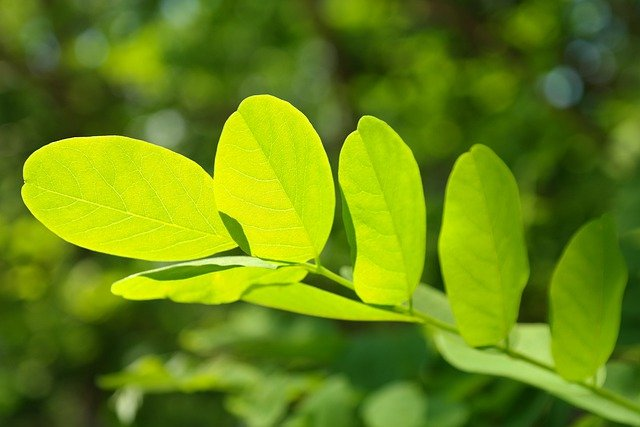 Free Cute Food Wallpaper Leaf Green Veins 183 Free Photo On Pixabay