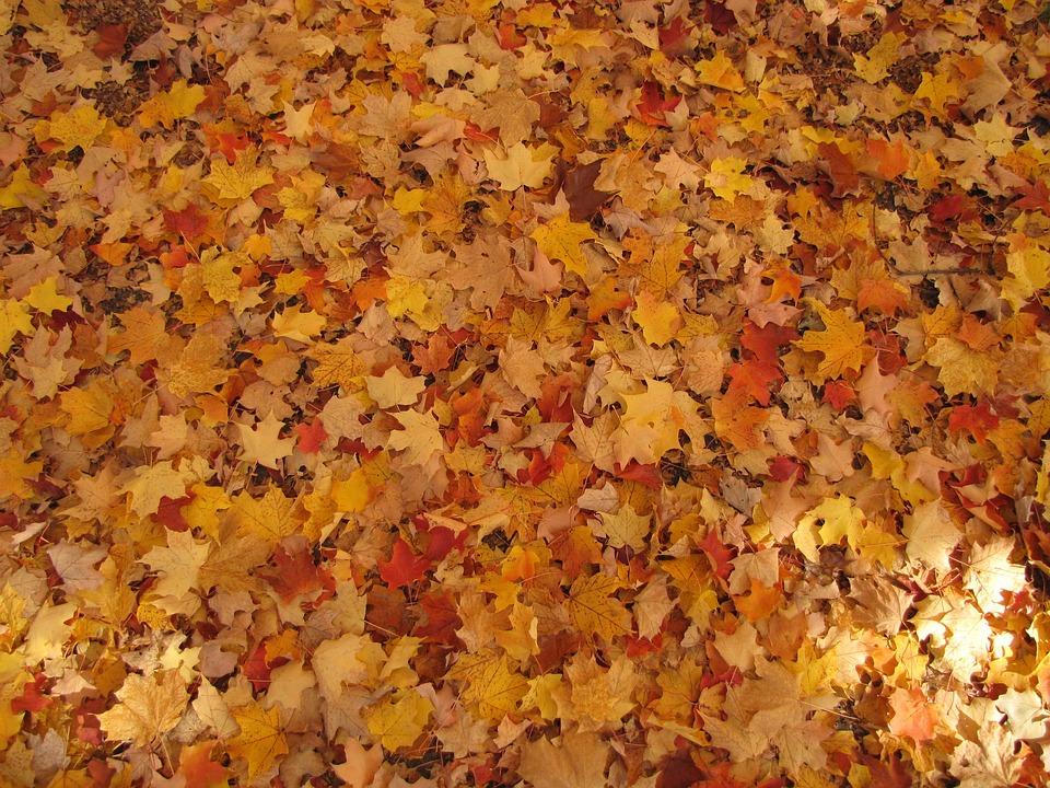 Seasonal Fall Coffee Desktop Wallpaper Autumn Fallen Leaves Fall 183 Free Photo On Pixabay
