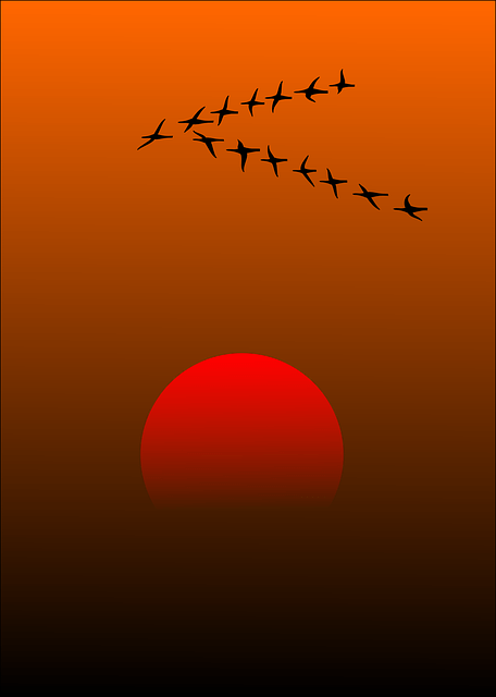 Sun Wallpaper Hd Free Vector Graphic Migratory Birds Birds Sunset Sun
