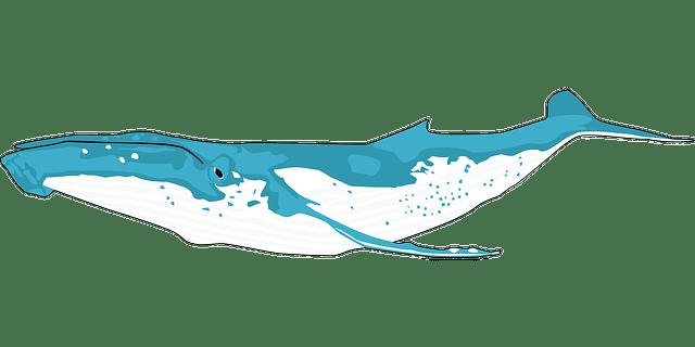 3d Flower Photo Wallpaper 무료 벡터 그래픽 동물 바다 고래 푸른 고래 브라 생쥐 해양 포유류 Pixabay의 무료