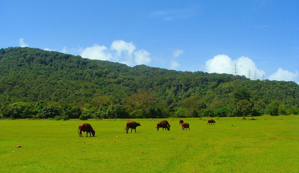 All Animals Hd Wallpapers Free Photo Goa Western Ghats Mountains Free Image On