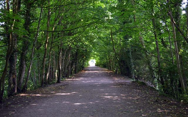 3d Door Wallpaper Trees Tunnel Path 183 Free Photo On Pixabay