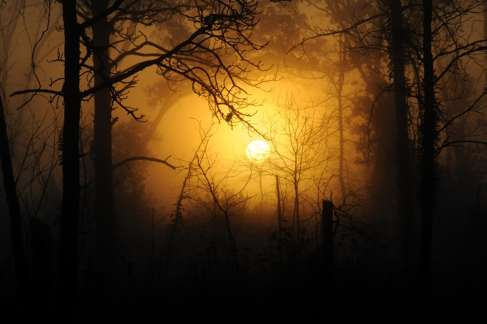 Fall Mountains In The Sun Wallpaper Free Photo Woods Forest Nature Wood Sunset Free