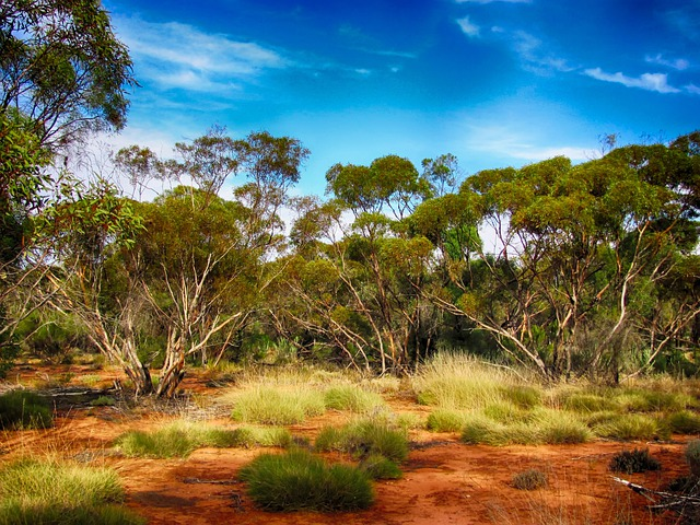 Free Fall Wallpaper 1024x768 Australia Landscape Scenic 183 Free Photo On Pixabay