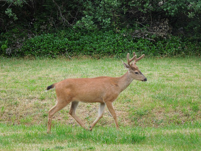 Free Animal Wallpaper Download Deer Running Field Nature 183 Free Photo On Pixabay