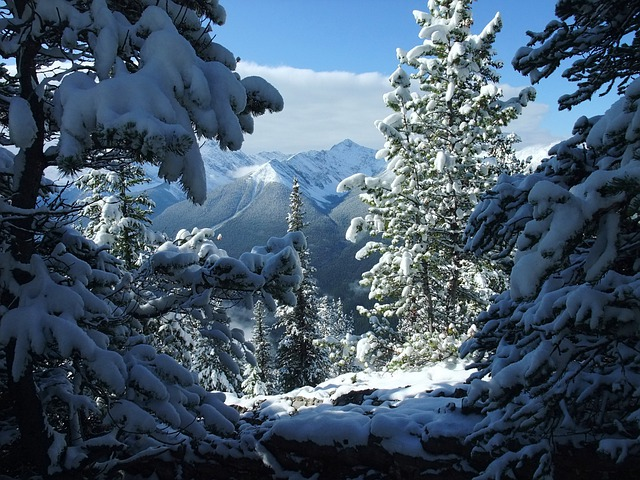 Beautiful Animal Wallpapers Banff Canada Snow 183 Free Photo On Pixabay