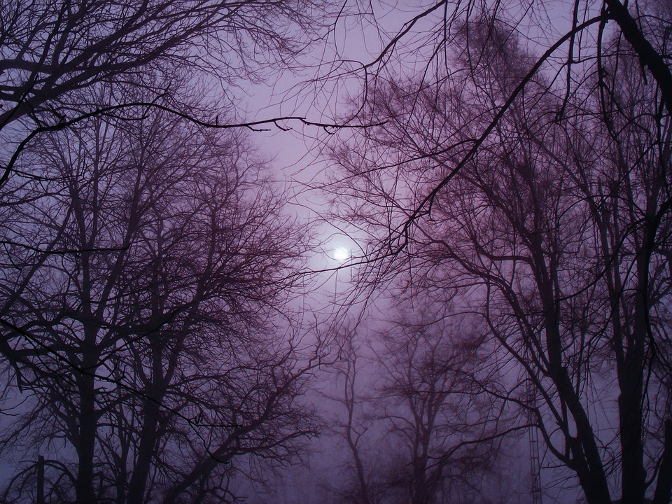 Free Fall Forest Wallpaper Free Photo Winter Fog Outside Cold Free Image On
