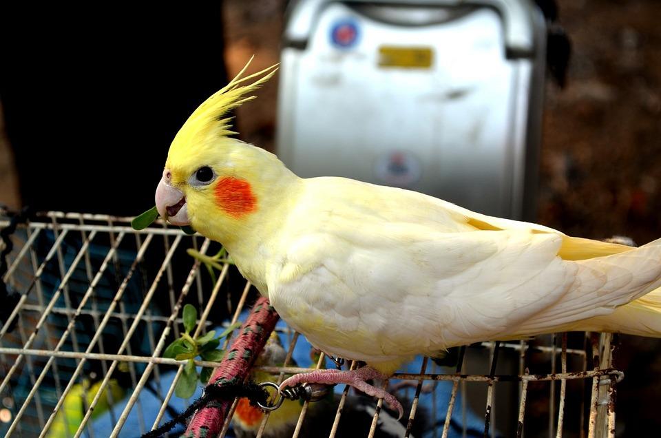 Spring Animal Wallpaper Animals Bird Birds 183 Free Photo On Pixabay