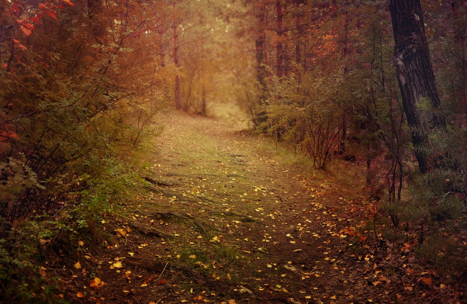 Serene Wallpapers Large Fall Photo Gratuite Nature Paysage Route Automne Image