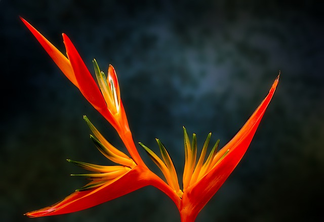 Beautiful Animal Pictures Wallpaper Bird Of Paradise Flower 183 Free Photo On Pixabay