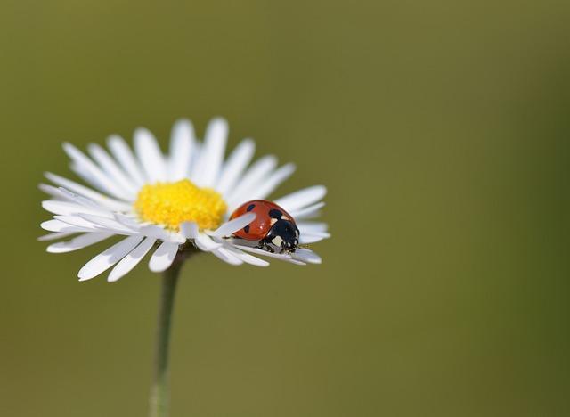 Black Music Wallpaper Hd Free Photo Ladybug Nature Insects Macro Free Image