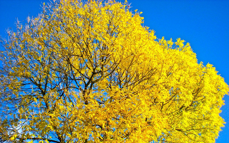 Fall Wallpaper 16 9 무료 사진 트리 가 노란색 Bl 229 Himmel Pixabay의 무료 이미지 246194