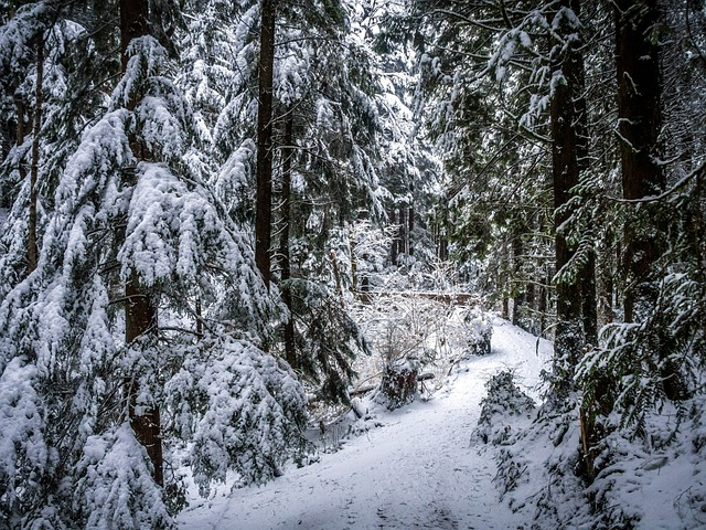 Free Desktop Wallpaper Falling Snow Free Photo Winter Path Deep Forest Snowy Free Image