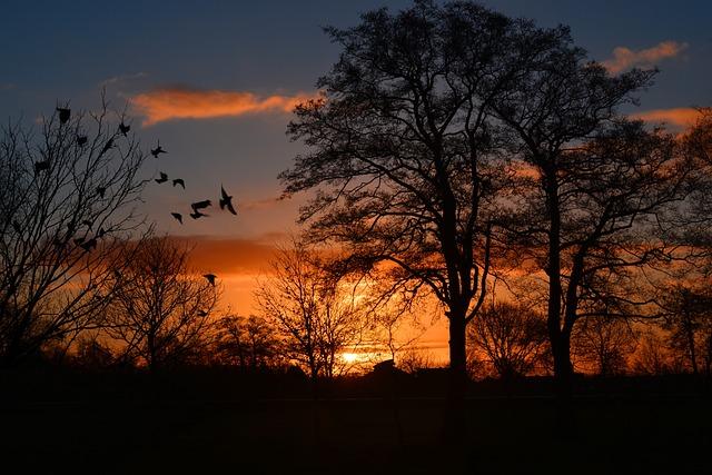 Wallpaper Windows 10 3d Free Photo Sunrise Morgenrot Skies Bird Free Image