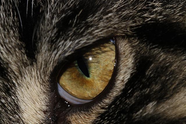 Black White Wallpaper Girl Free Photo Animal Eye Eyes Animals Free Image On