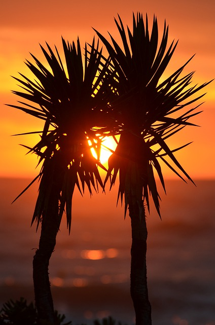 Download Romantic Love Quotes Wallpapers Free Photo Palm Trees Palms Exotic Sunset Free Image