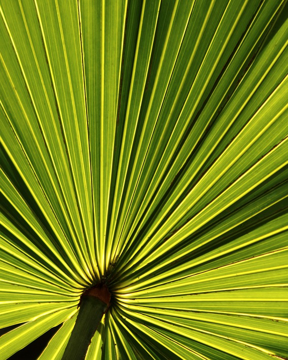 Tree With Leaves Falling Wallpaper Palm Leaf Tropical 183 Free Photo On Pixabay