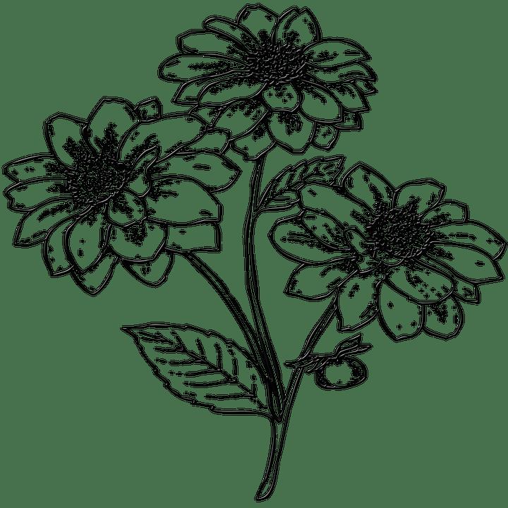 Orange Fall Peonies Wallpaper Blumen Garten Pflanze 183 Kostenloses Bild Auf Pixabay