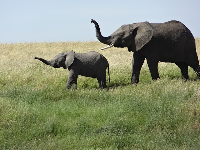 24 Wallpaper Hd Free Photo Female Elephant Baby Grass Free Image On