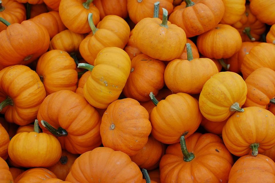 Fall Harvest Computer Wallpaper Free Photo Pumpkins October Harvest Free Image On