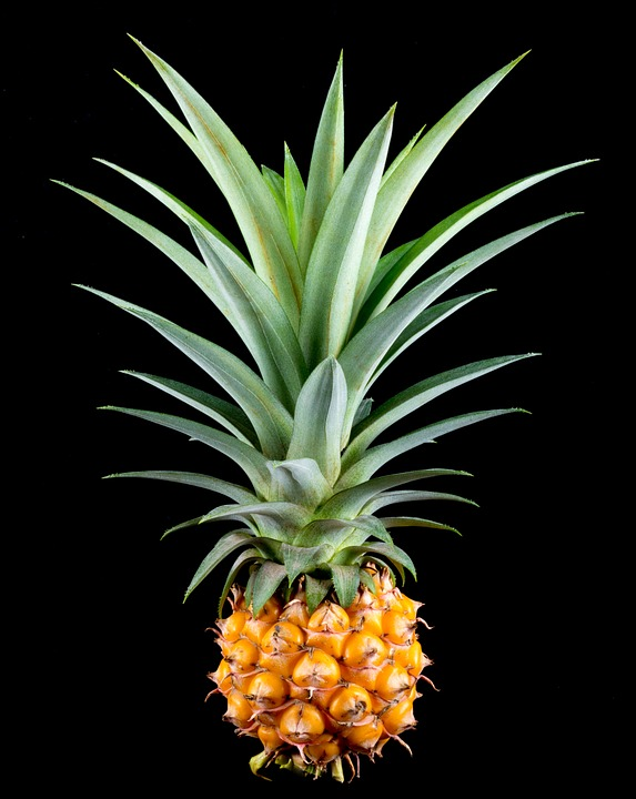 Black And Green Wallpaper Free Photo Pineapple Small Pineapple Fruit Free Image