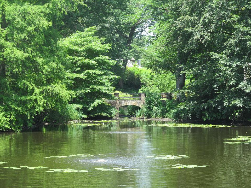 Forest Black And White Wallpaper Free Photo Pond Summer Green Peaceful Free Image On
