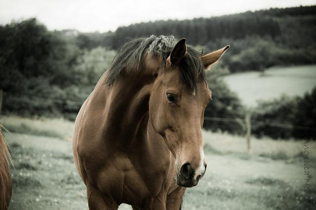 Images Of Nature Wallpaper With Quotes Photo Gratuite Cheval Nature Animaux Ferme Image