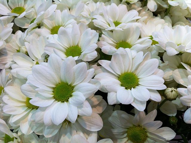 Iphone 7 Wallpaper Pinterest Foto Gratis Flores Natureza Flores Brancas Imagem