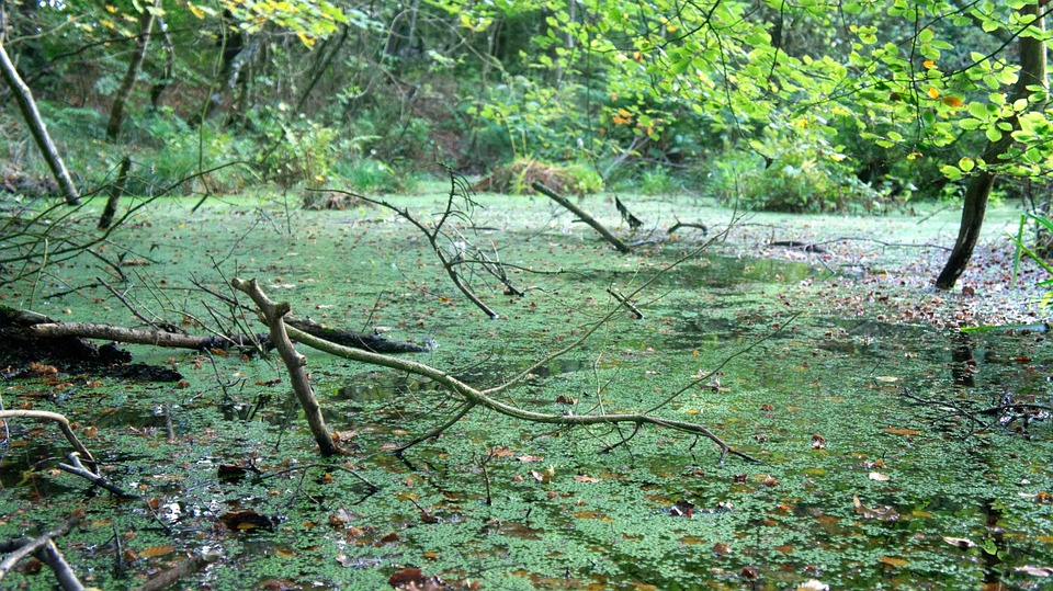 Fall With Water Wallpaper Free Photo Swamp Bog Water Pond Green Free Image On