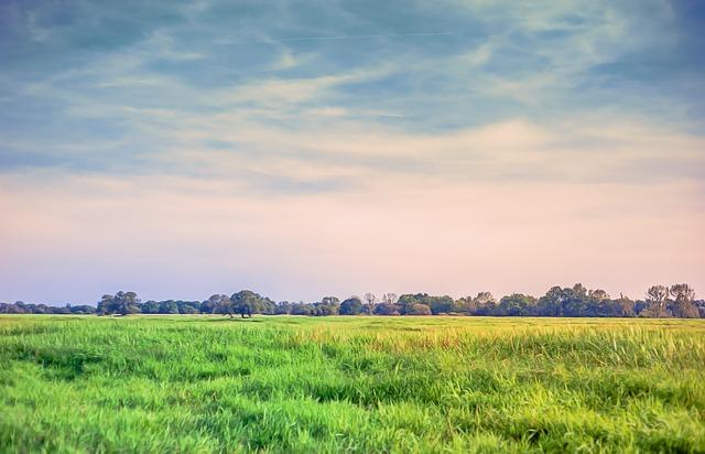 Summer Desktop Wallpaper Hd Landscape Meadow Grass 183 Free Photo On Pixabay
