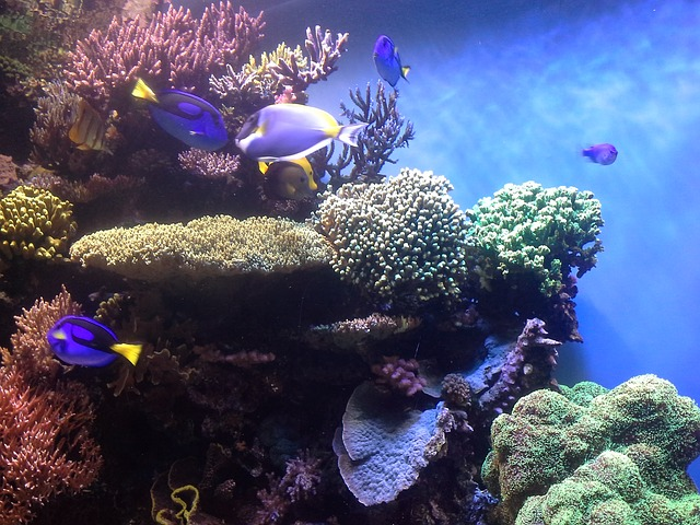 Download Wallpaper Aquarium 3d Coral Reef Corals Aquarium 183 Free Photo On Pixabay