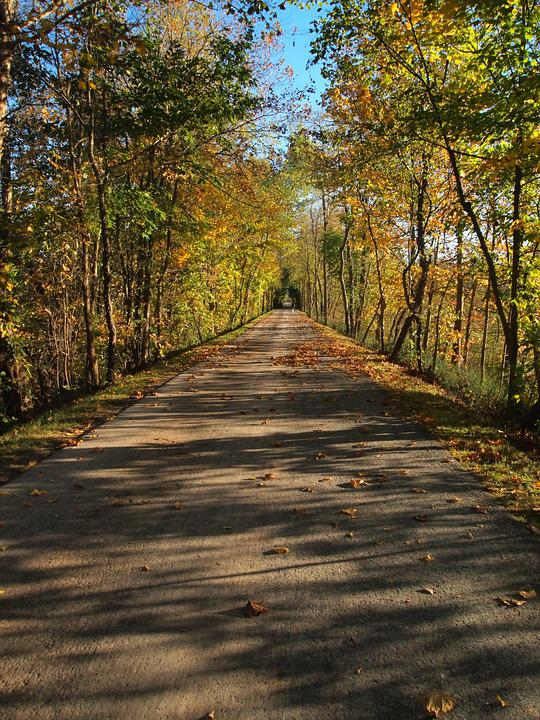 Fall Leave Wallpaper Free Photo Trail Road Path Trees Autumn Free Image