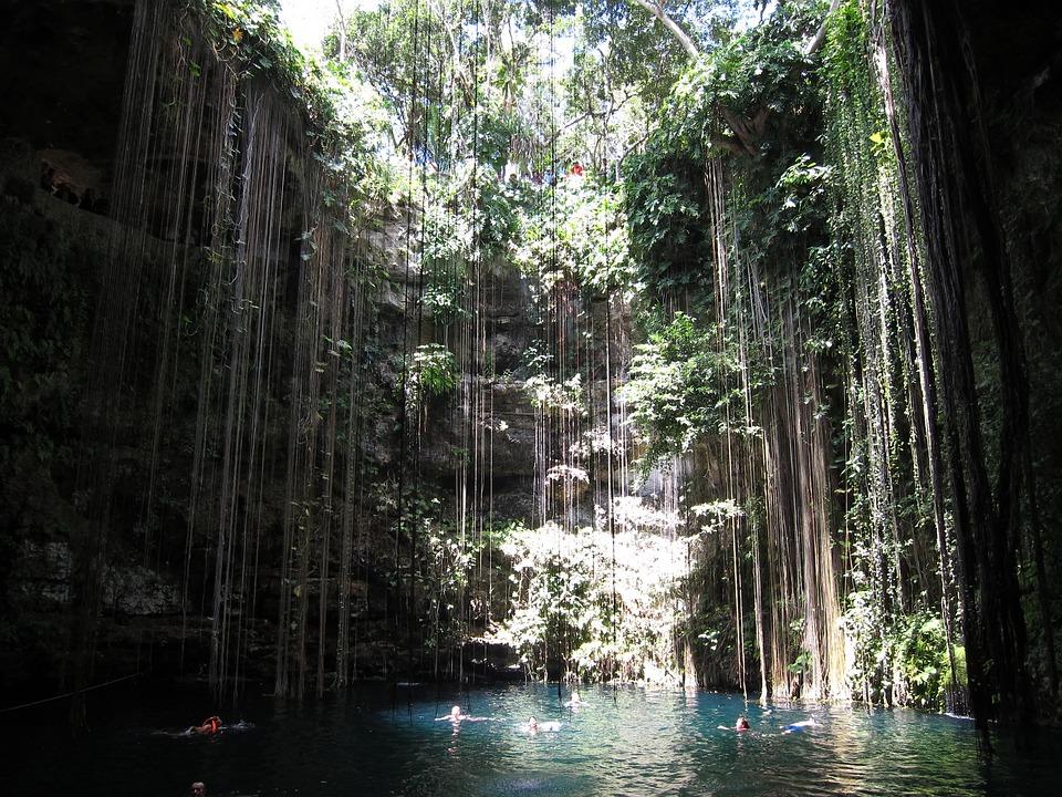 Iphone 6 Orange Flower Wallpaper Free Photo Cancun Pool Jungle Natural Free Image On