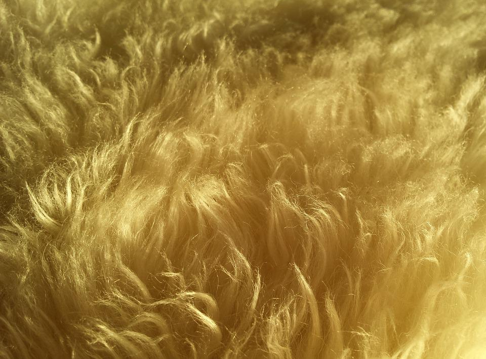 Cute Background Wallpaper For Computer Free Photo Wool Fur Hair Soft Fluffy Free Image On