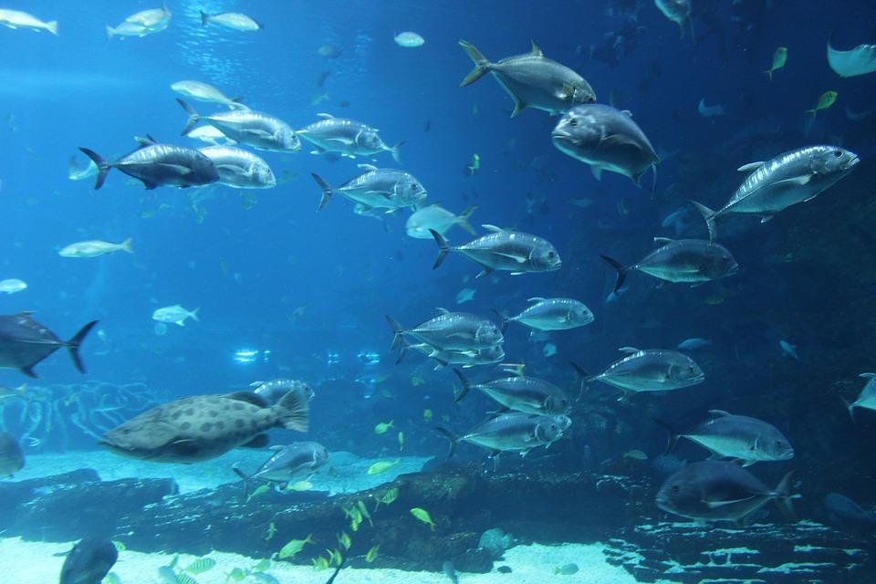 Animal Computer Wallpaper Free Photo Aquarium Ocean Park Fish Free Image On