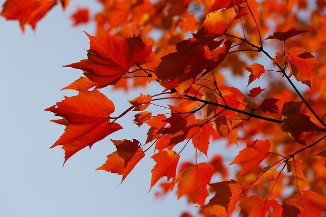 Falling Snow Desktop Wallpaper Tree Autumn Yellow 183 Free Photo On Pixabay