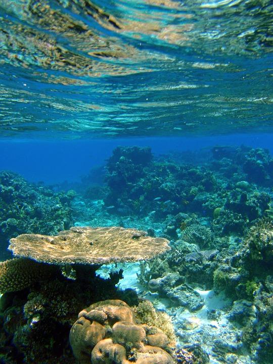Fish Animation Wallpaper Free Download Free Photo Fiji Reef Coral Tropical Ocean Free