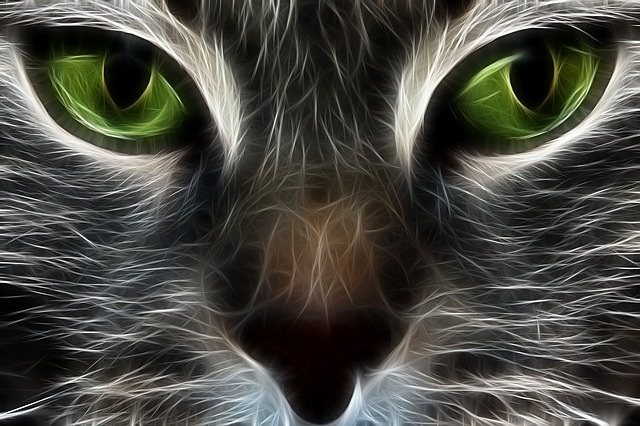 Pitbull Wallpapers 3d Free Illustration Cat Fractal Animal Eyes Free Image