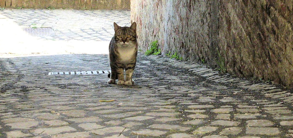 Wallpaper Hd Portrait Orientation Free Photo Alley Cat Rome Stray Cat Italy Free Image