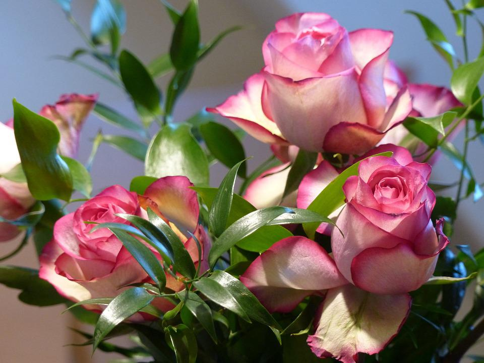 Beautiful Girl Image Hd Wallpaper Rose Ecuador Pink 183 Free Photo On Pixabay