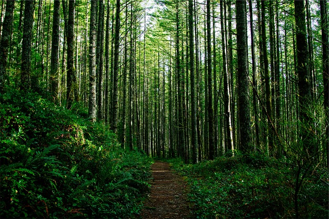 Microsoft Animated Wallpaper Free Photo Trees Forest Woods Nature Trail Free