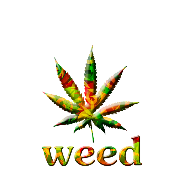 Rasta Girl Wallpaper Hd Free Illustration Marijuana Leaf Bright Graphic Free