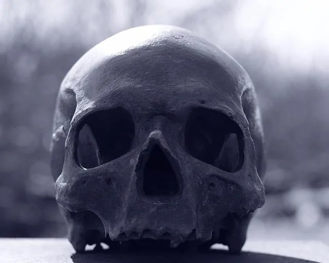 Black Rose Wallpaper Free Download Free Photo Skull And Crossbones Skull Human Free