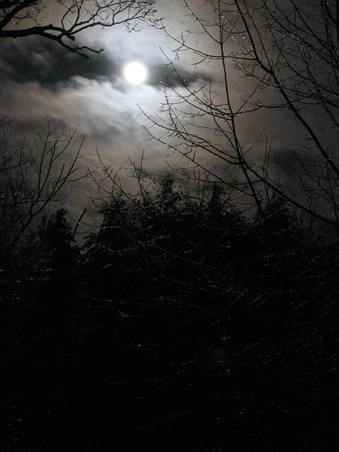 3d Ice Wolf Wallpaper Moon Moonlight Night 183 Free Photo On Pixabay