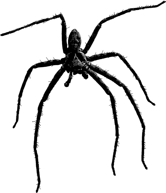 Danger 3d Wallpaper Download Spider Arachnid Insect 183 Free Vector Graphic On Pixabay