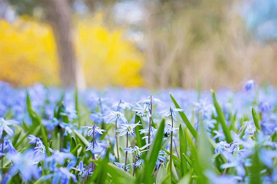 Spring Flowers Country Nature · Free photo on Pixabay - photo of spring
