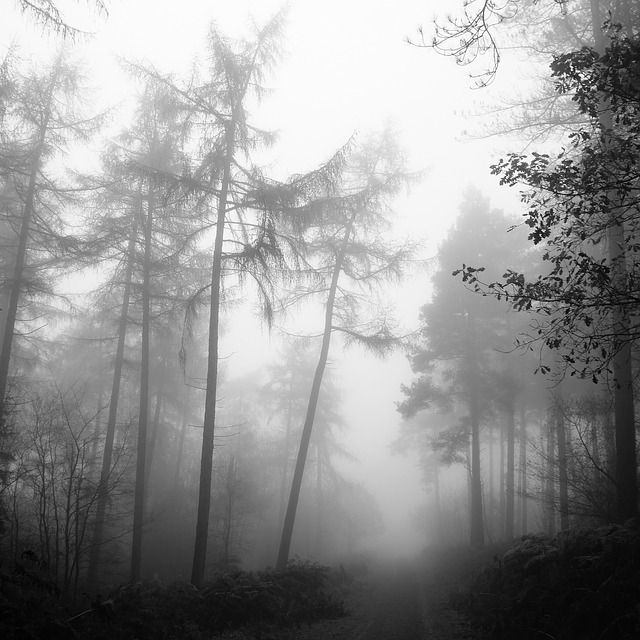 Background Wallpaper Hd Fall Fog Free Photo Forest Fog Nature Tree Mystery Free