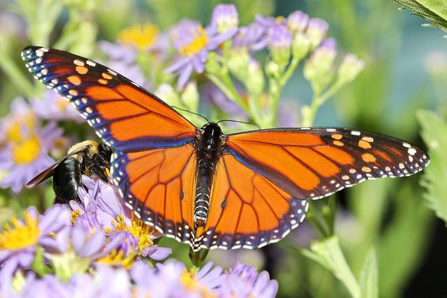 Beautiful Girl Wallpapers Free Free Photo Monarch Butterfly Insect Orange Free