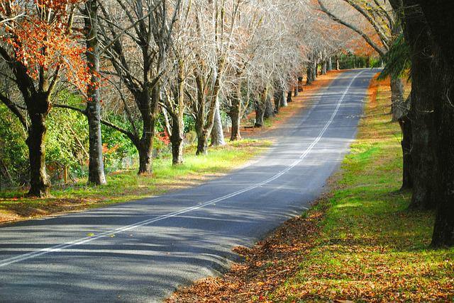 Fall Leaves Hd Wallpapers 1080p Free Photo Road Street Autumn Fall Leaves Free
